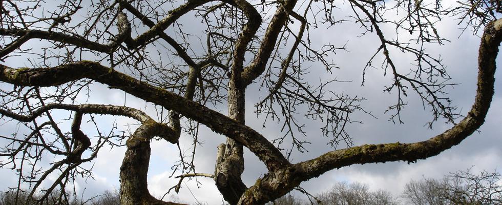 Citaten Over Bomen : Fruitbomen beverboomzorg