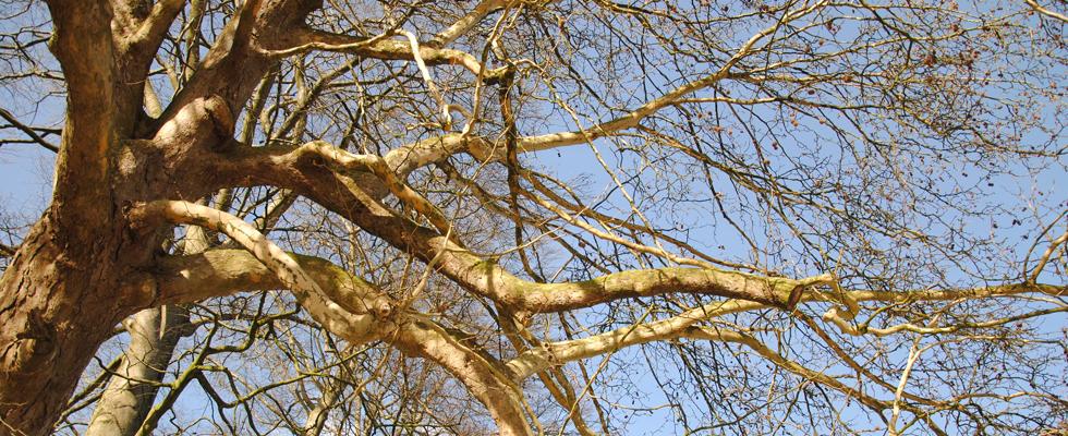 Citaten Over Bomen : Bomen in de bijbel beverboomzorg