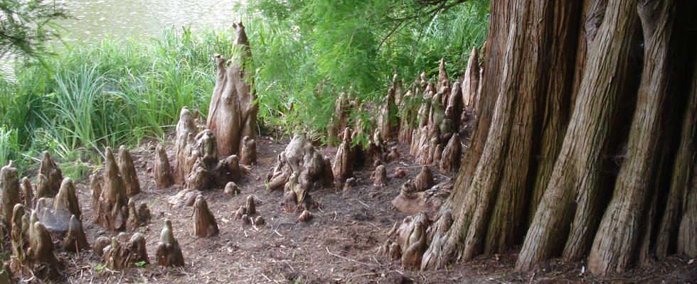 Citaten Over Bomen : Bever boomzorg beverboomzorg